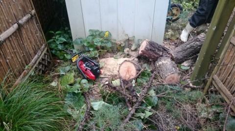 倒木伐採中