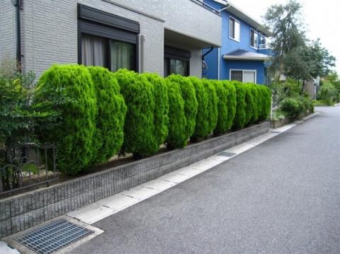 2015夏M市B邸剪定前 (2)