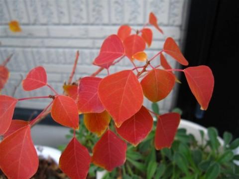 メトロキャンドル紅葉