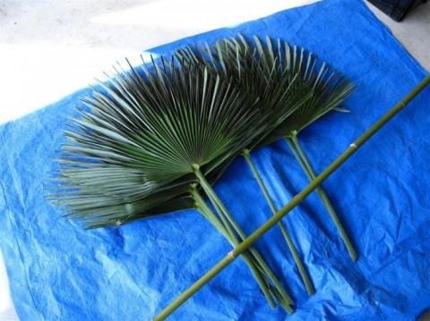 棕櫚葉 小竹