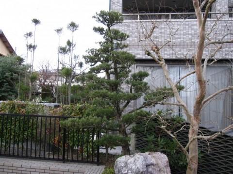 2014冬N邸剪定前 (1)